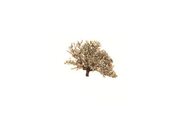 Arbusti - Alberi