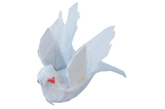 Piccione in volo - Animali Piumati