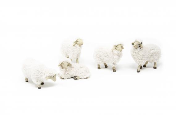 Set 5 pecore con lana - Animali Piumati