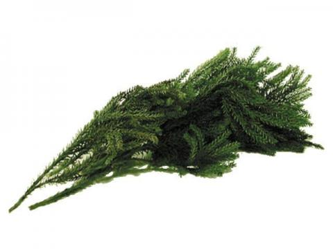 Busta Lycopodium - Vegetali, Ghiaia, Pietrisco